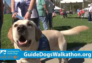 Pinstripe PR team promotes Southeastern Guide Dogs Walkathons