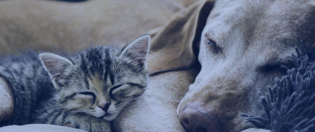 pinellas animal foundation promotional video